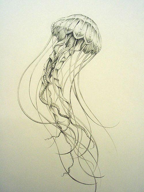 Cnidaria Drawing