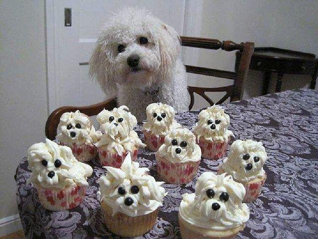 All my cupcakes. #dogs #cupcakes via Petco | LMAO!! | Pinterest ...