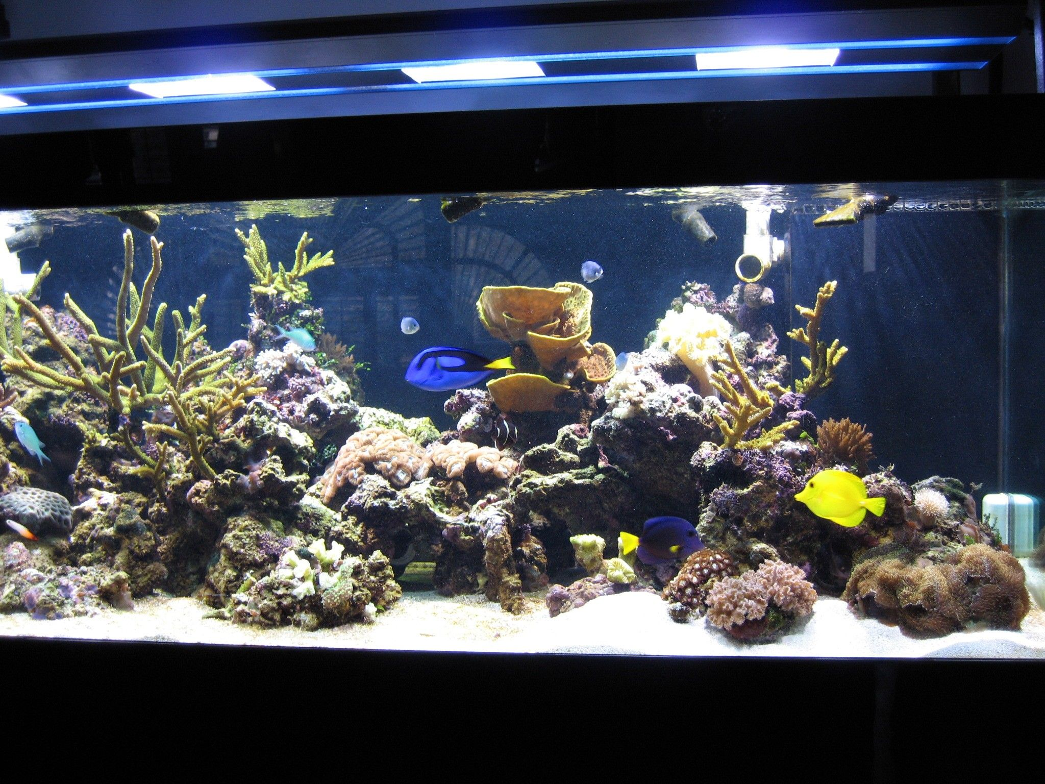 300 gallon reef aquarium setup reef aquarium