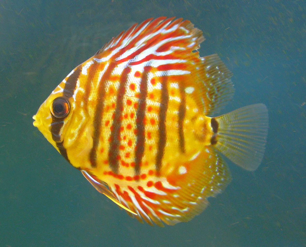 Pin On Underwater