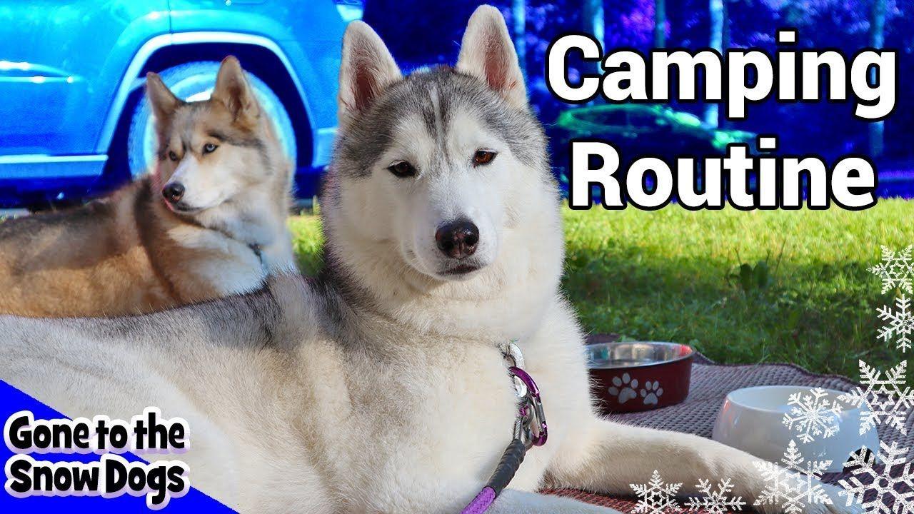 My Dog S Camping Routine Huskies Camping Routine 2018 Dog