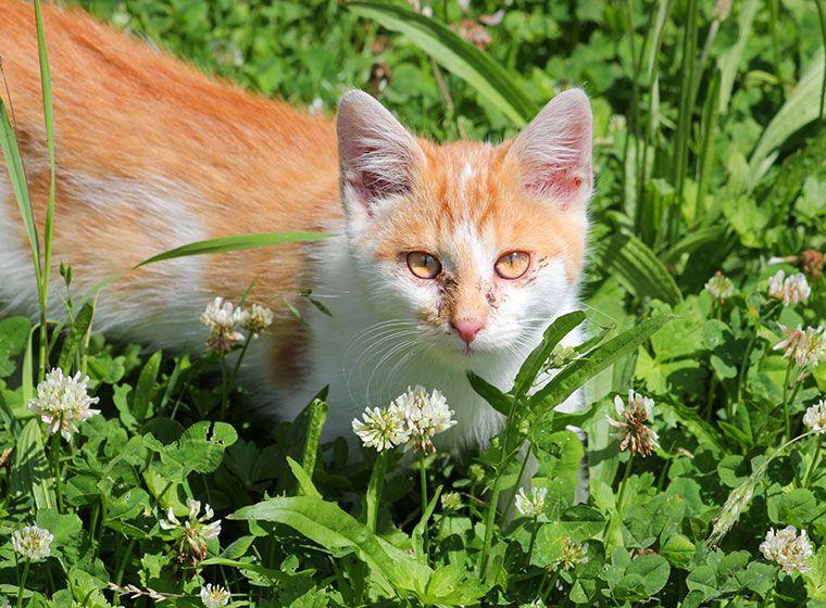 Katzenschnupfen Erkennen Und Behandeln Katzen Schnupfen Und