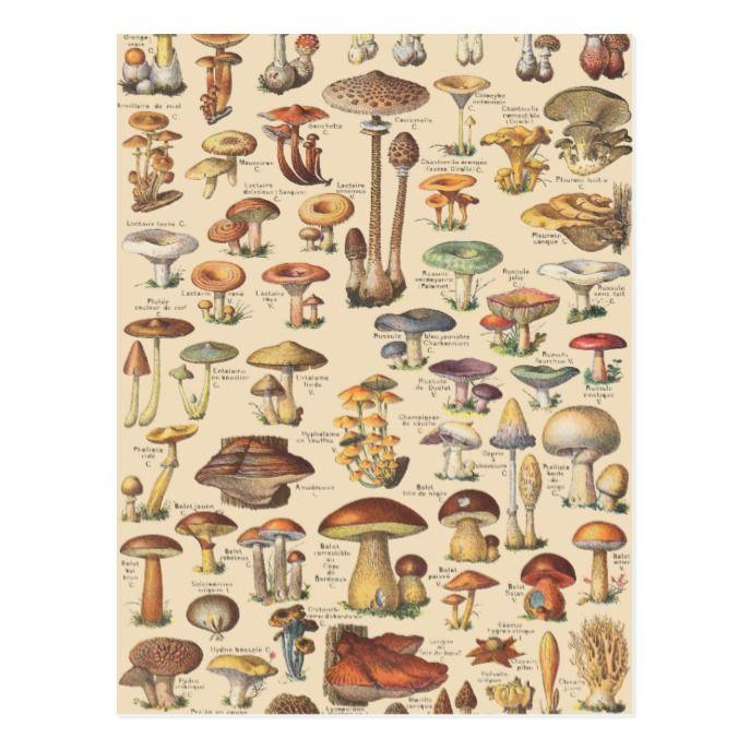 Vintage illustration of mushrooms postcard | Zazzl