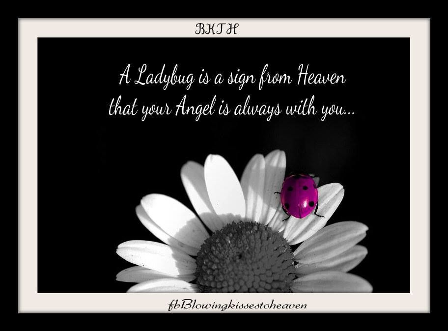 Ladybug from Heaven | Our Ladybugs from Heaven | Signs from