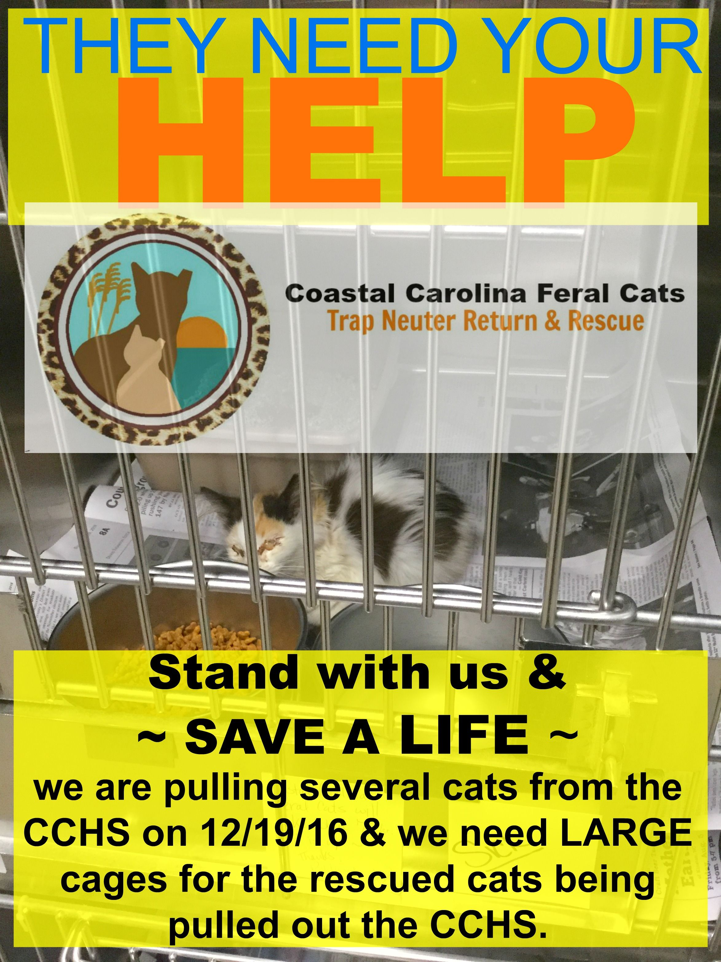Pin by coastal carolina feral cats t on ccfc ads cat