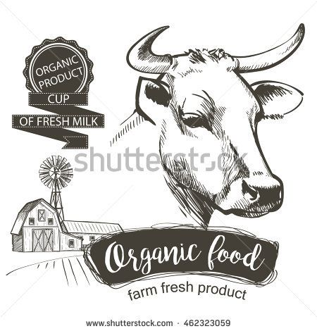 cows head hand drawn in a graphic style vintage vector engraving