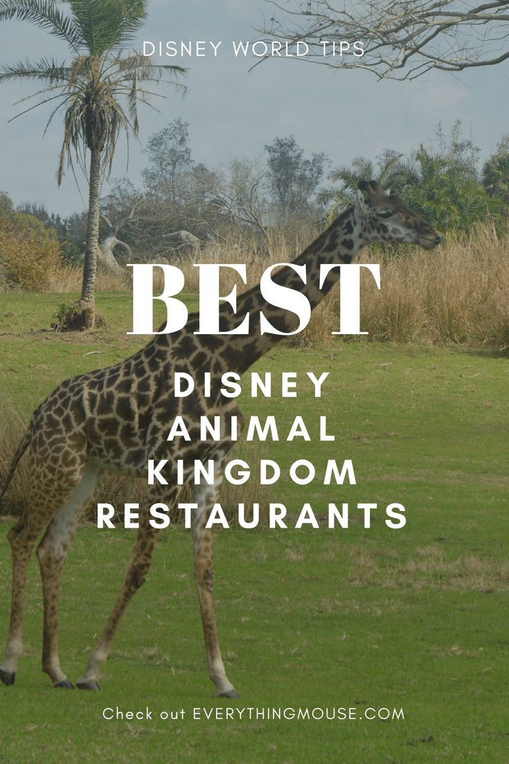 18++ Disney animal kingdom restaurants ideas in 2021