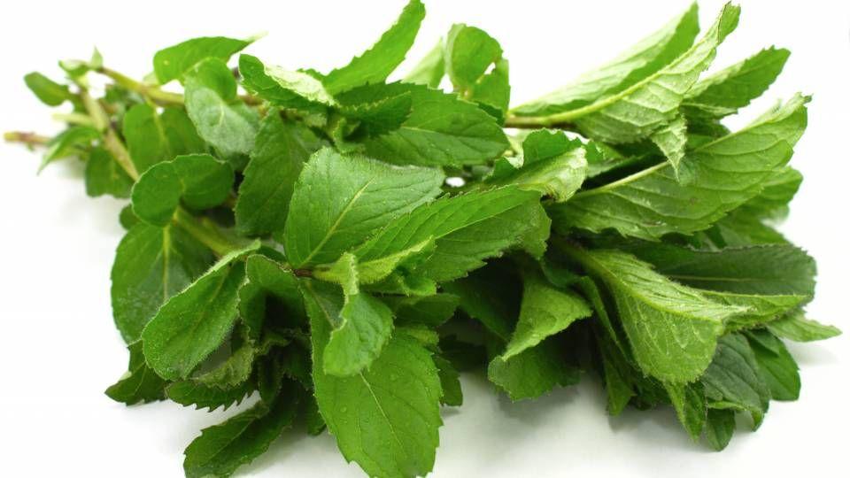 Tzatziki med mynte | En smule citron og lidt olivenolie er også ingredienser i denne tzatziki. Afprøvet opskrift, med god afrundet smag.
