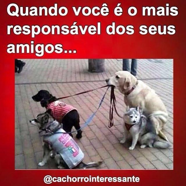 Petmeupet Cachorro Gato Amoanimais Amocachorro Filhode4patas