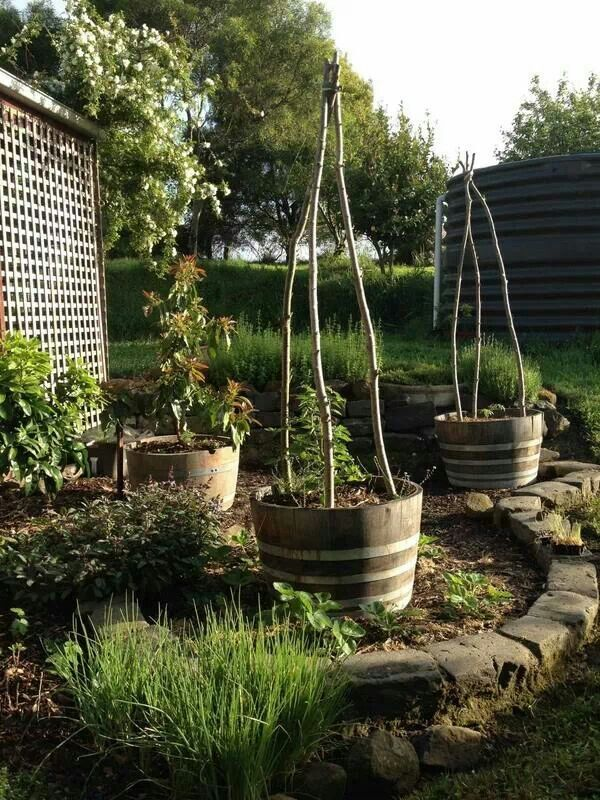 Way to grow tomatoes naturally. Veggie Garden & Other