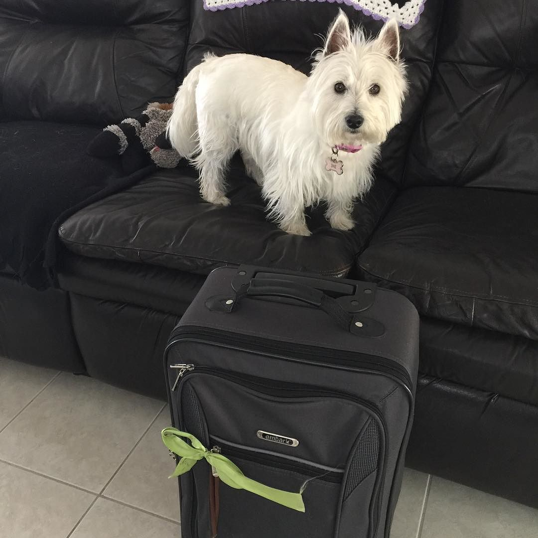 IT HAPPENED!!! I can't believe they actually left... WITHOUT ME!!! Whatever grandma and I will have a ball together. I'm sure she will spoil me rotten. Not sure how active if at all I will be the next couple of days guys. We will miss you all terribly. Se