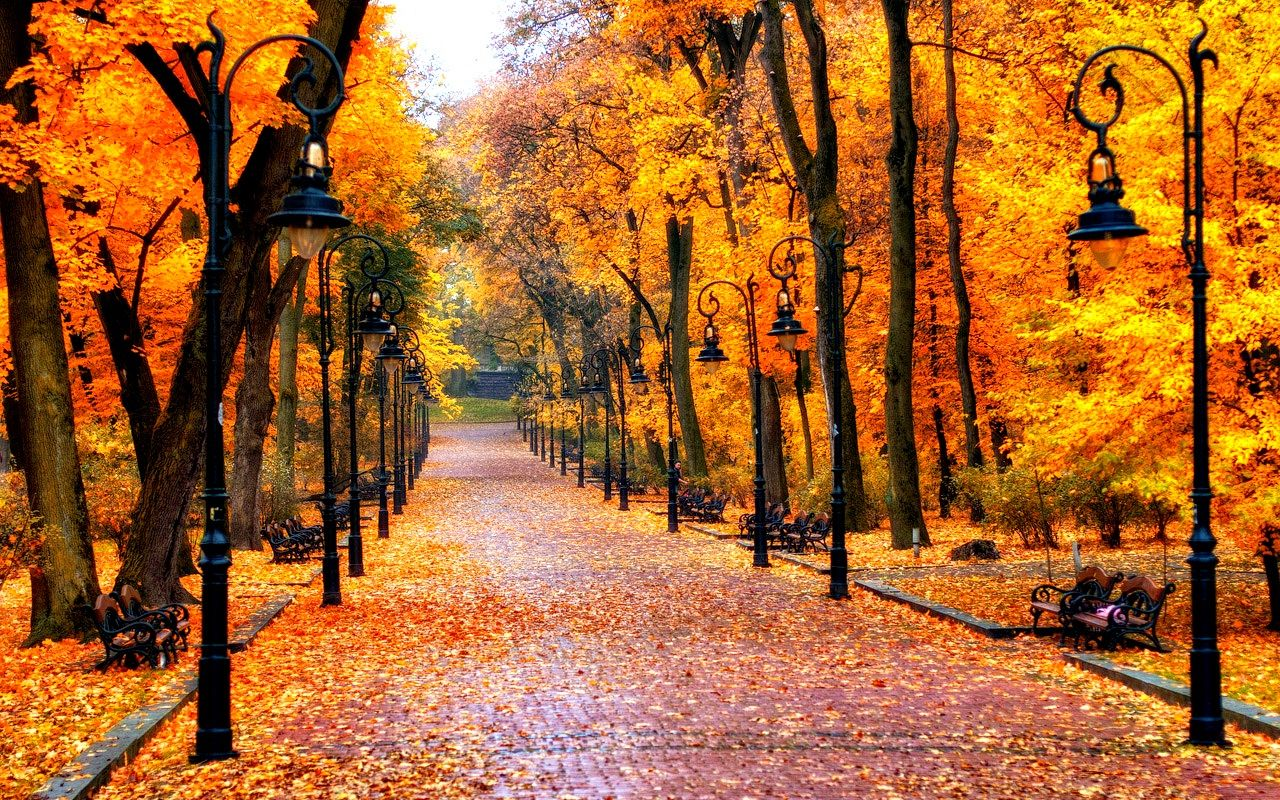 Download Stunning Autumn Wallpaper 1280x800 Full HD Wall