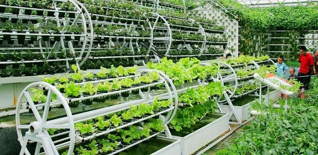 Aquaponic Design Plans, Everything You Need to Know: from Backyard to Profitable Business mobi downl