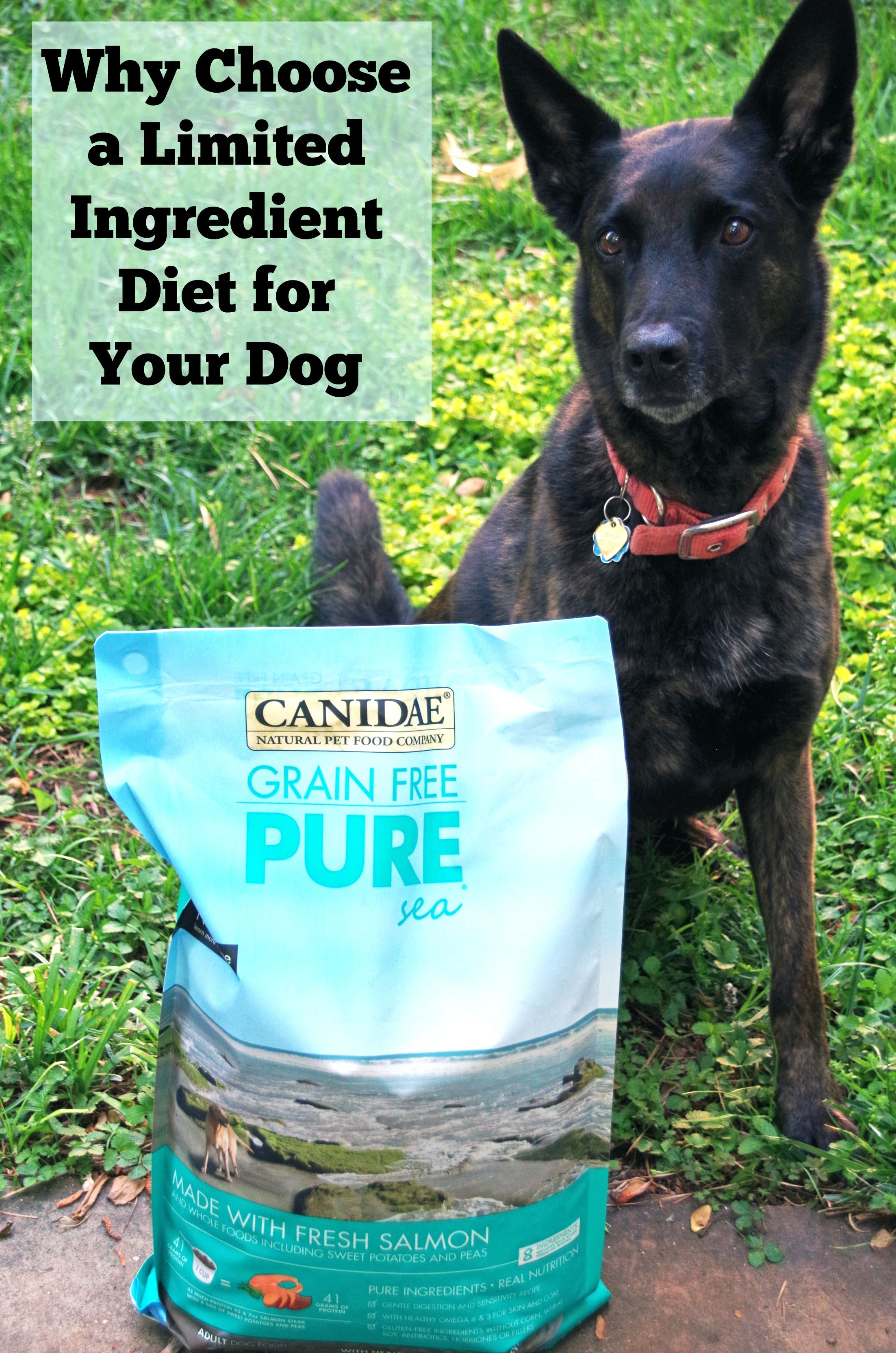 Choosing A Limited Ingredient Diet For Your Dog