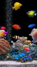 Free Mobile Phone Themes Download Www Mobile88 Com Fish Wallpaper Aquarium Live Wallpaper Saltwater Fish Tanks