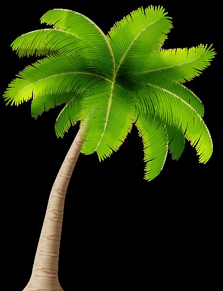 Palm Transparent Png Image Palm Tree Clip Art Coconut Tree Drawing Palm Tree Drawing