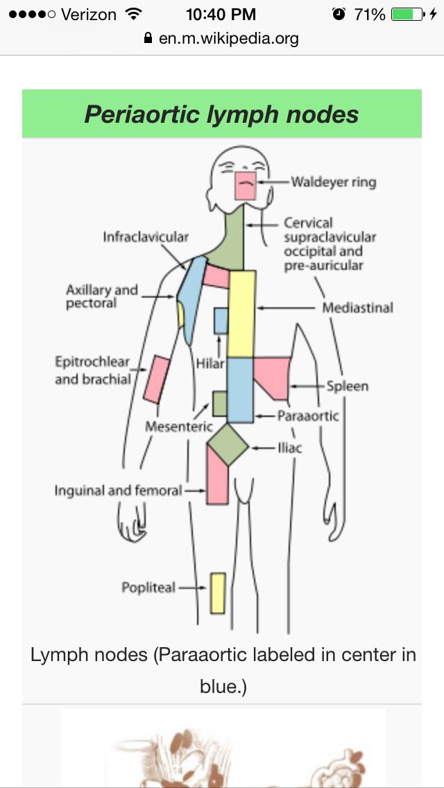 Berühmt Einführung In Die Anatomie Und Physiologie Quiz ...