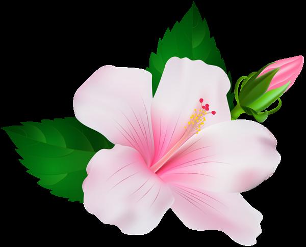 Hibiscus Png Clip Art Image Flower Drawing Flower Art Flower Clipart