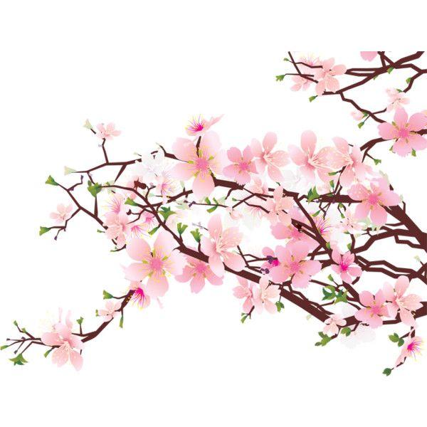 cherry blossom clip art free clipart best liked on polyvore rh pinterest com Japanese Cherry Blossom Line Drawing Japanese Cherry Blossom Drawings
