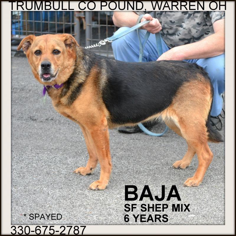 Adopt Baja On Petfinder Trumbull County Adoption Pet Adoption