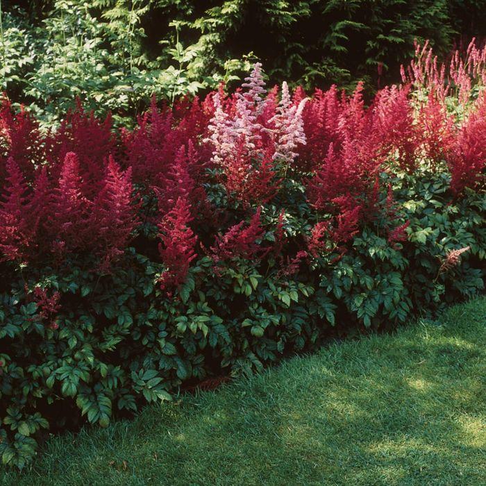rot bl hende schattenpflanzen sorgen f r farbe in sonst eher dunkleren ecken ihres gartens. Black Bedroom Furniture Sets. Home Design Ideas