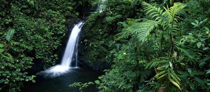 Image Result For Monteverde Costa Rica Fly Away Pinterest - Costa rica vacation packages with airfare