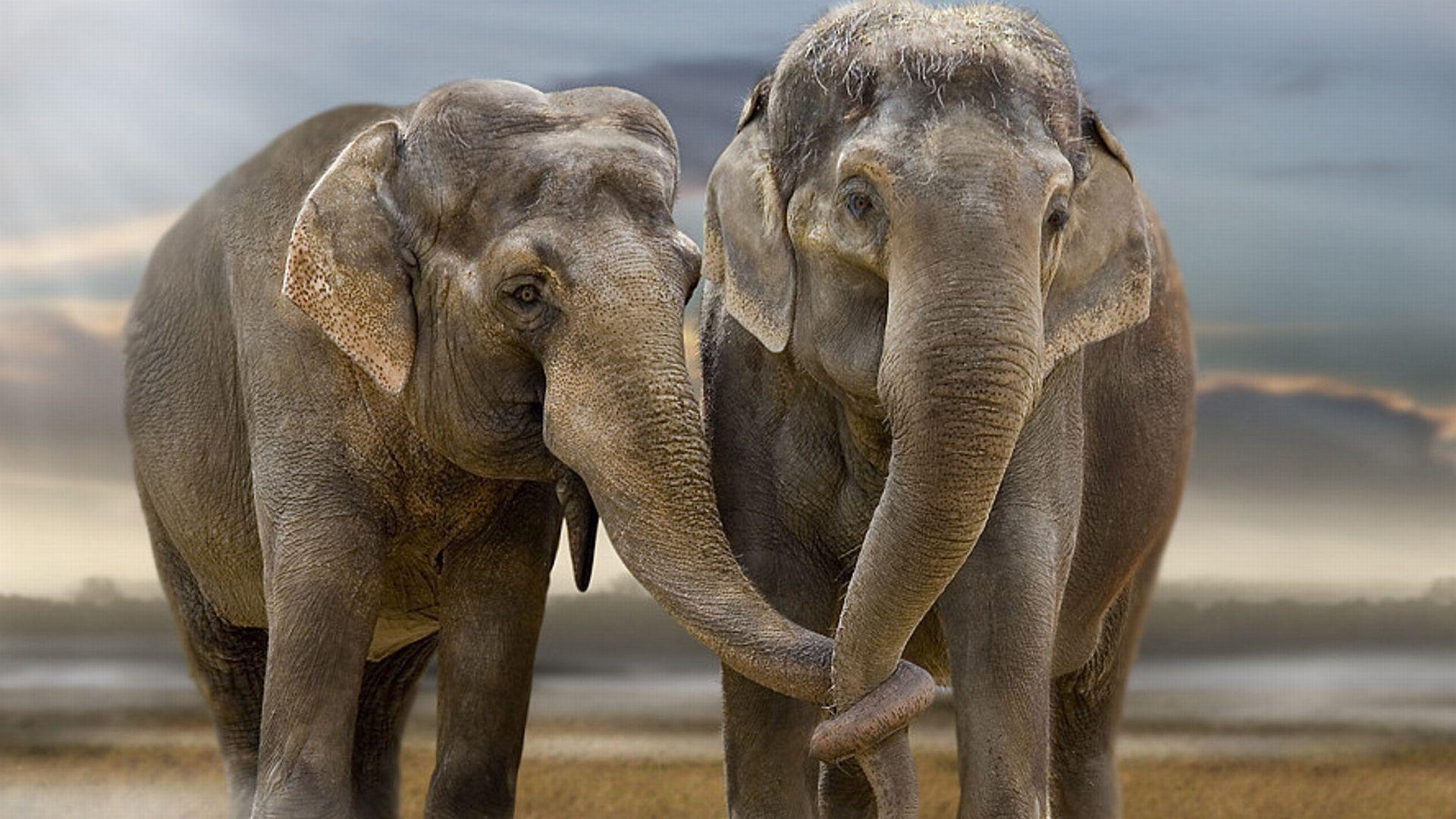 Fonds D Ecran Elephant Tous Les Wallpapers Elephant
