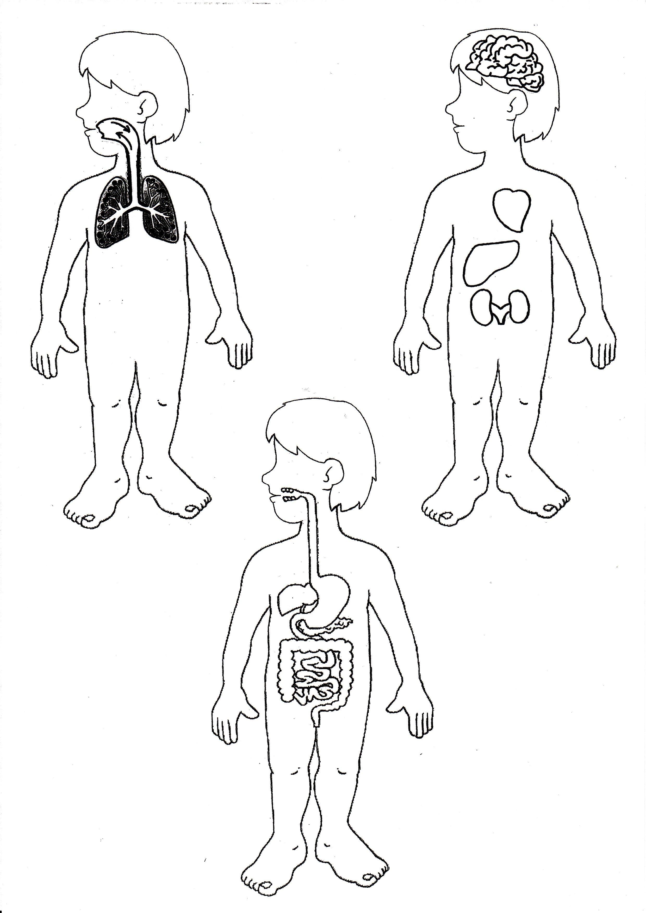 Risultati Immagini Per Schede Didattiche Corpo Umano