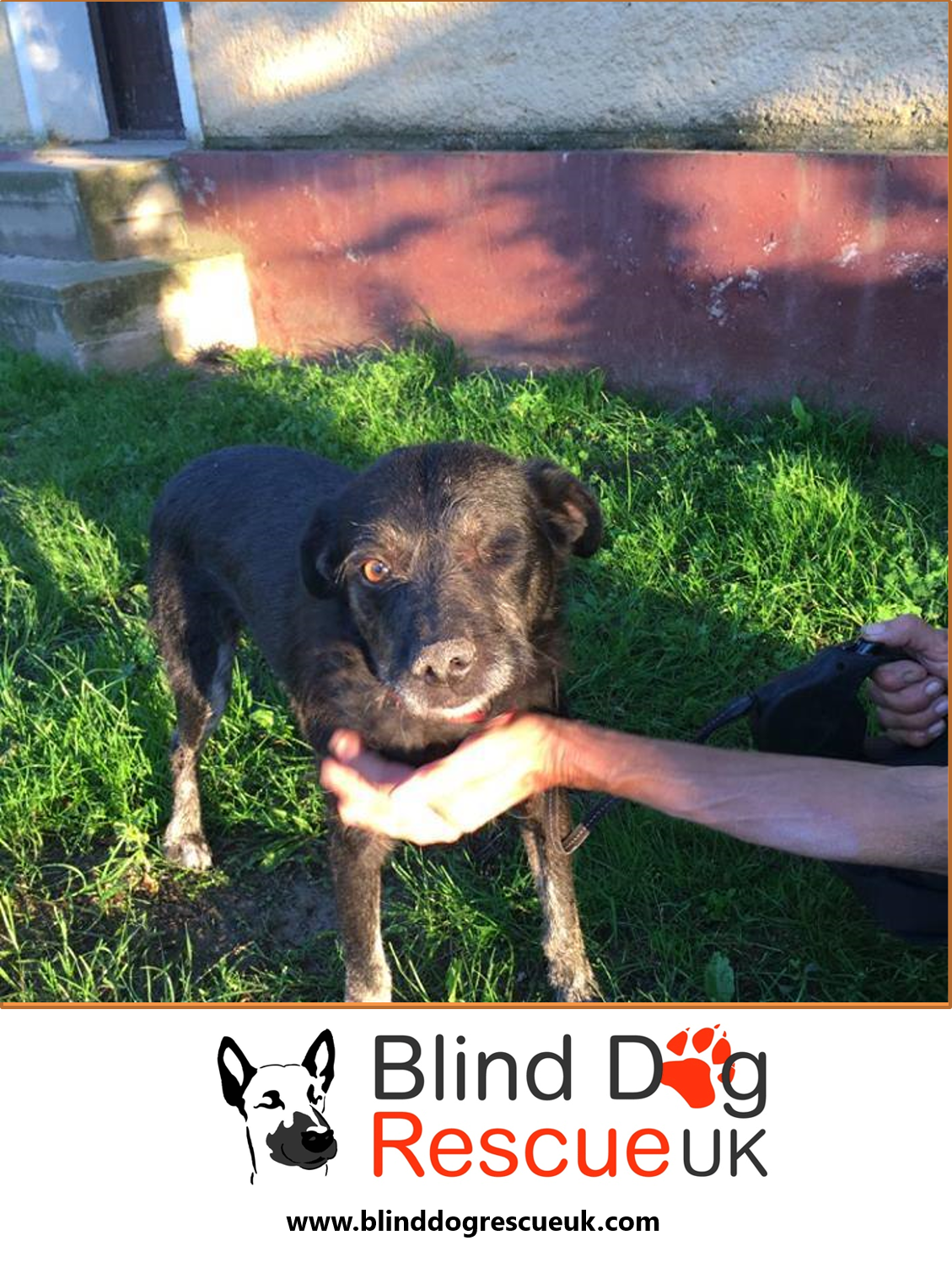 Super Friendly Milo Would Love A Home Of His Own He Gets On Well With Other Dogs Please Contact Bdrukrehoming Yahoo Com Dog Rescue Uk Blind Dog Dog Adoption