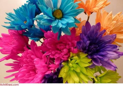 Spring season flowers list of spring flowers achi khasi dot com spring season flowers list of spring flowers achi khasi dot com mightylinksfo