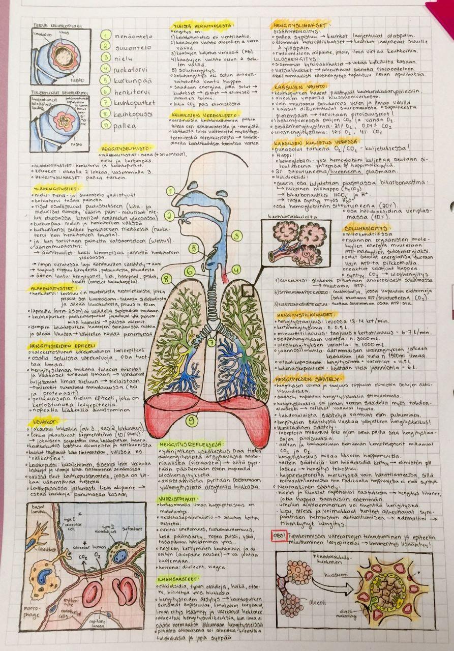 Download: Respiratory System.pdf