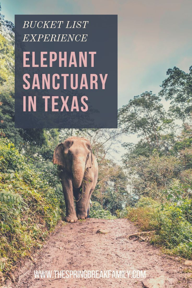 One of a Kind Trip: An Elephant Sanctuary in Texas #traveltexas