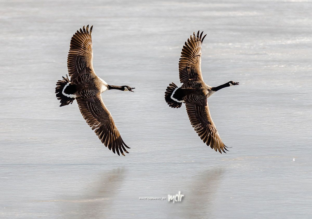 Catch me if you can by Maurizio Di Renzo on 500px