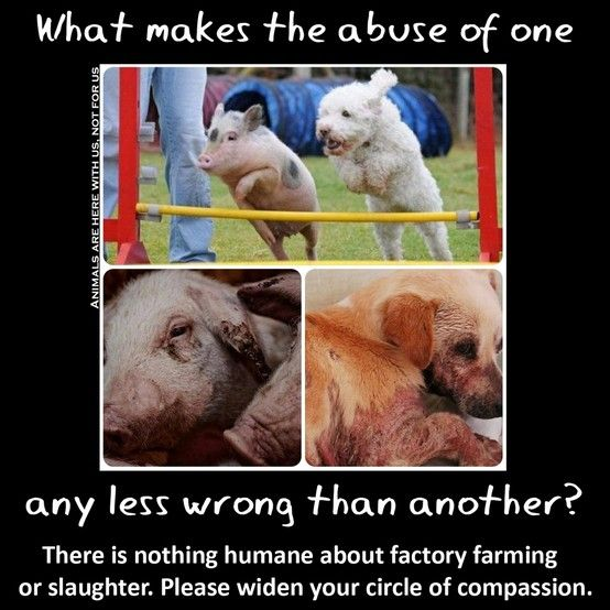 When our attitudes and behaviors towards animals are so inconsistent, and this inconsistency is so unexamined, we can safely say we have been fed absurdities. It is absurd that we eat pigs and love dogs and don't even know why.  Yet most of us don't spend any time at all thinking about what species of animal we eat and why. ~ Melanie Joy