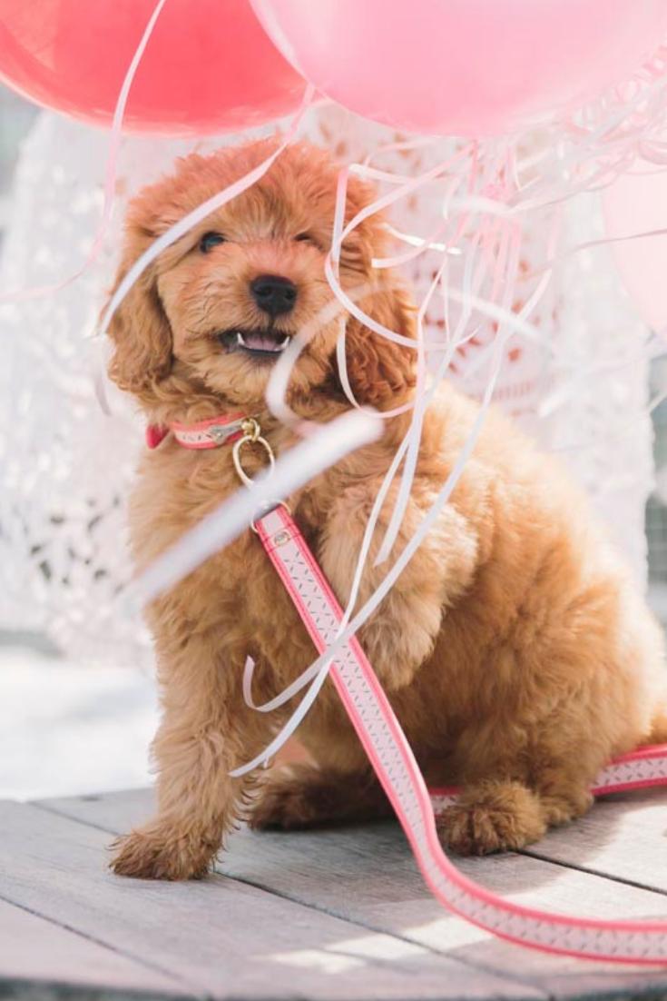 Valentine S Day Photo Shoot Valentines Day Photos Puppy Valentines Dog Valentines