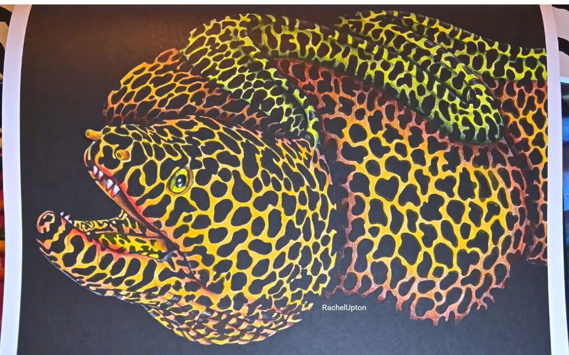 No 36 Rachel Upton Moray Eel Kleurplaten