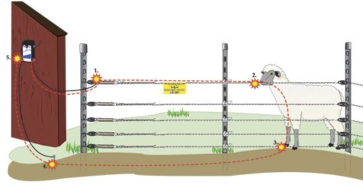 Many People Don T Understand How An Electric Fence Works This Diagram Demonstrates How The Energizer Push Electricity Into The Electric Fence Energizer Fence