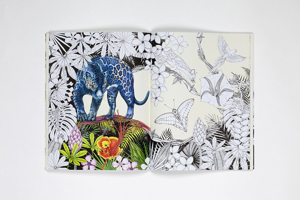 Image Result For Daisy Fletcher Into The Wild Coloring Book Coloring Books Artwork Wild