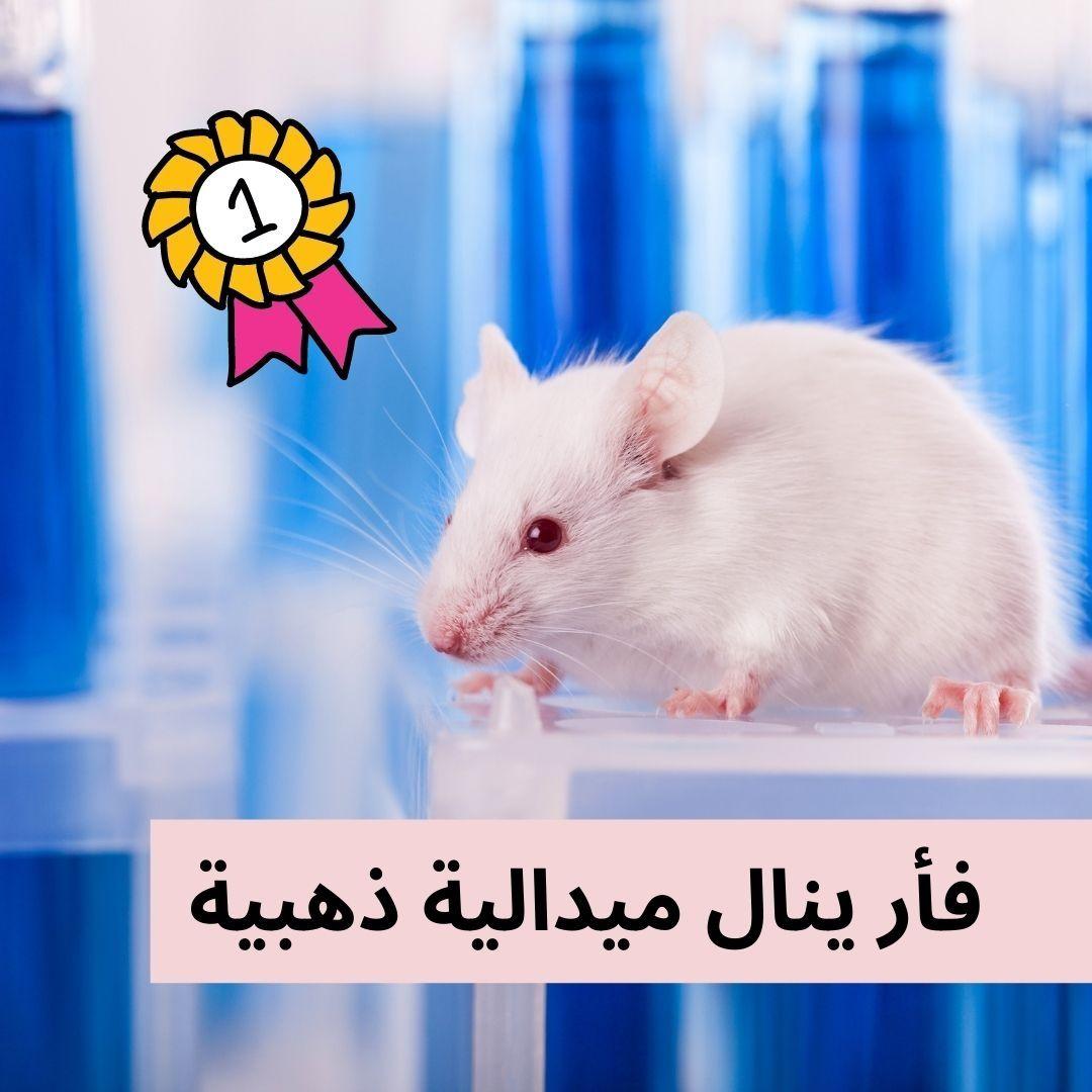 فأر برتبة ذهبية نال فأر إفريقي ميدالية ذهبية مرموقة نظير مساعدته في الكشف عن الألغام الأرضية واكتشف الفأر ماغاوا 39 لغما أرضيا و28 عبوة غي Animals Hamster
