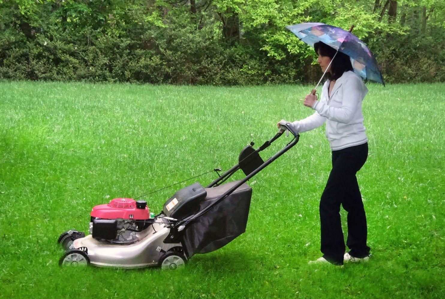 How Do You Mow Your Lawn When It S Wet As A Swamp We Asked An