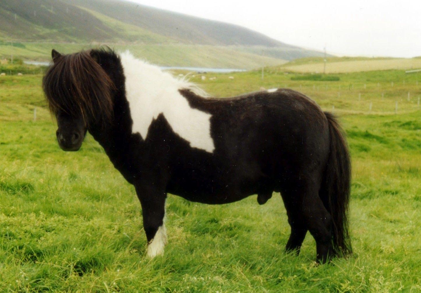 Telstar Ponies - Farewell, Farewell