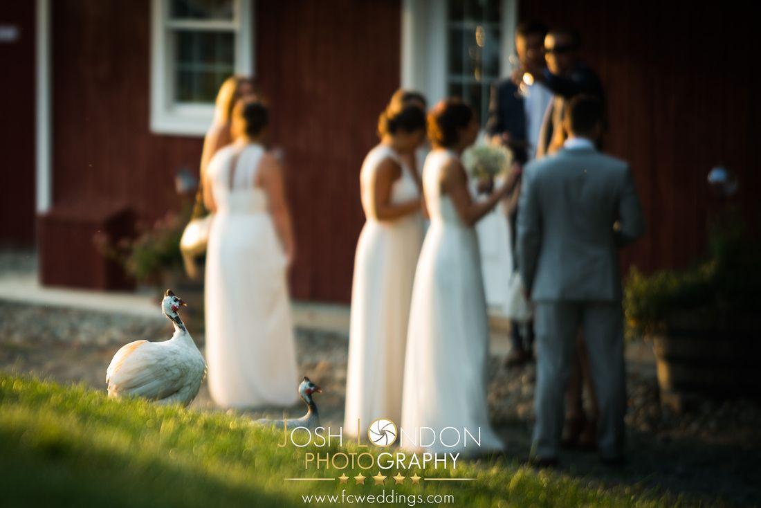 Pin By Lisa Caron On Smolak Wedding Events Sleeveless Wedding Wedding Events Sleeveless Wedding Dress