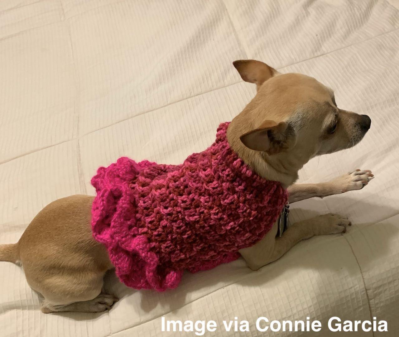 Small Dog Sweater Free Crochet Pattern | Crochet dog sweater