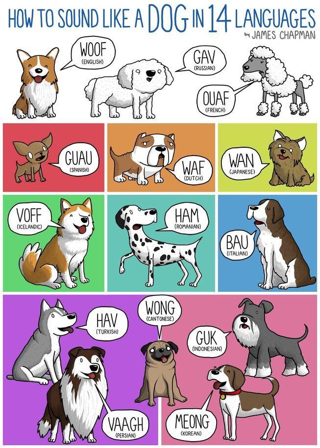 перевод на английский язык про животных