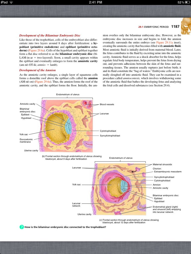 Principles of Anatomy and Physiology, Chapter 29, Development and ...