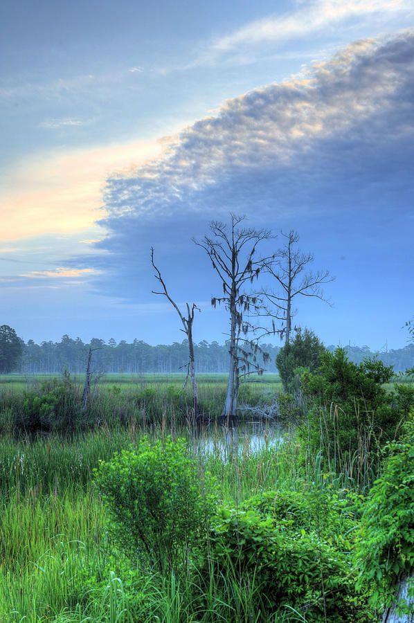 Cape Fear Morning Wilmington North Carolina Photography Landscapes Pinterest