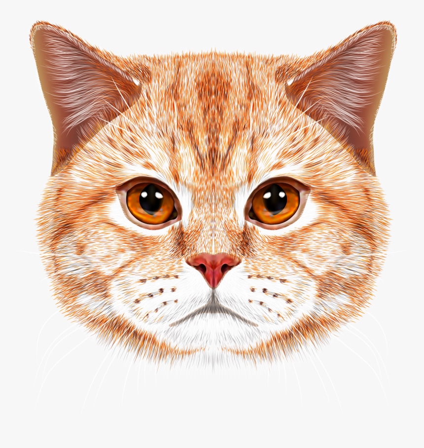 Orange Tabby Cat Face Hd Png Download Is Free Transparent Png Image To Explore More Similar Hd Image On Pngitem Orange Tabby Cats Cat Logo Design Cats