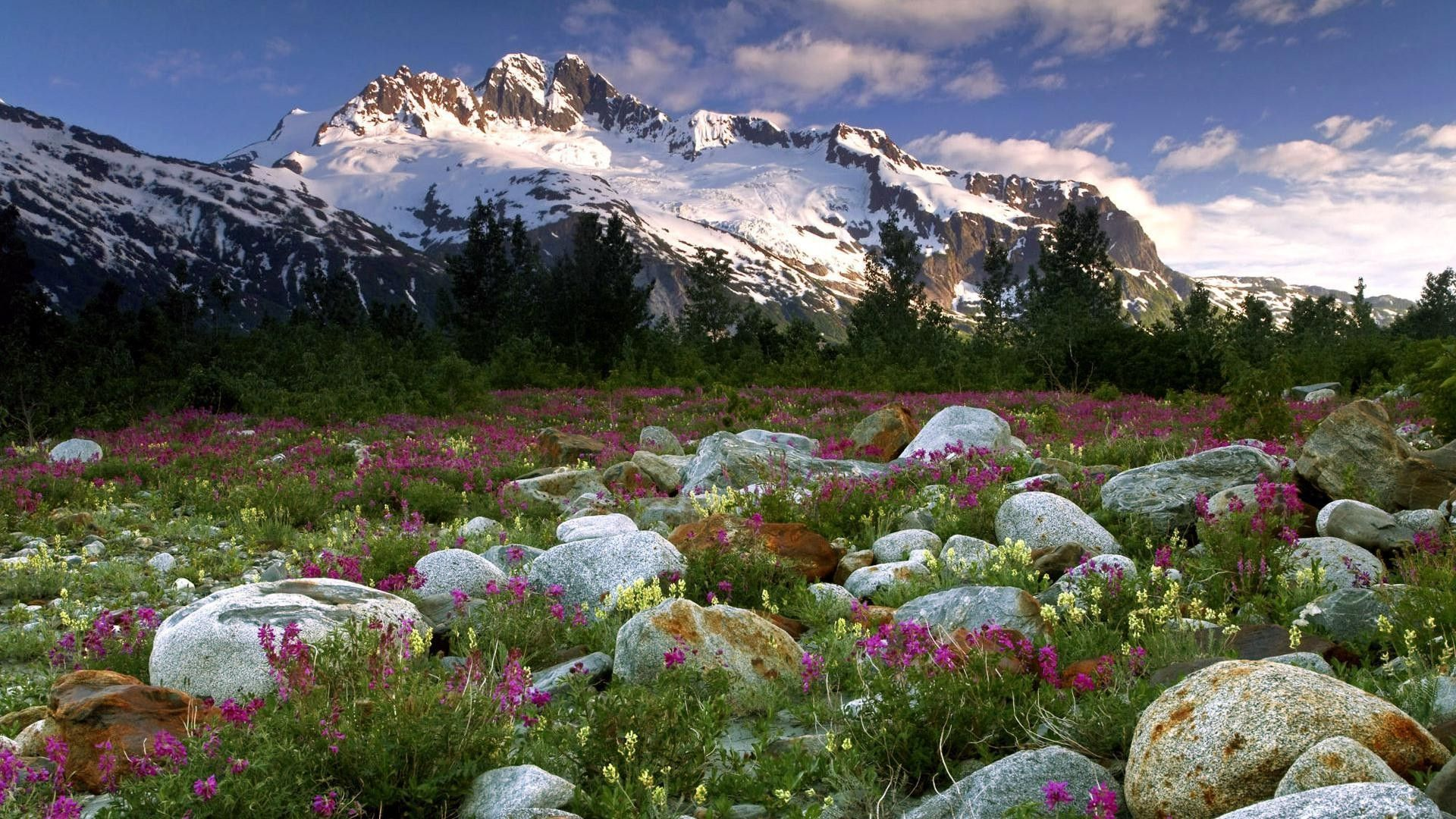 Nature Colors Mountains Flower Snow Mountain Beautiful Pines Pine