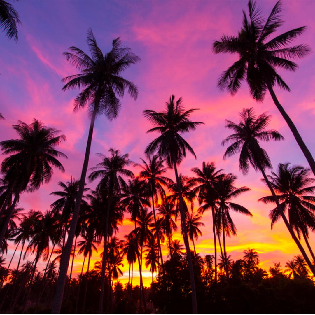 Chaweng Beach Koh Samui Palm Trees Wallpaper Palm Tree Silhouette Miami Wallpaper