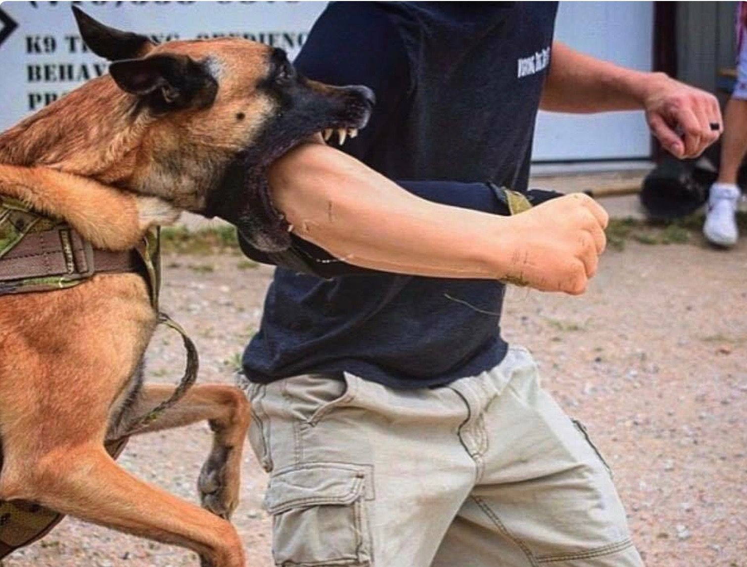 Pin By Zxe On K 9 S Malinois Dog Military Dogs Military Working Dogs